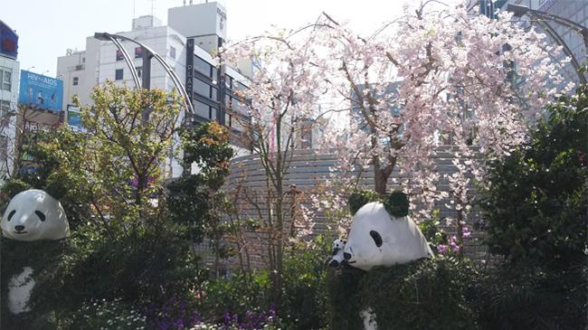 春の上野に行ってきました!